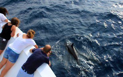 Faszination Galapagos