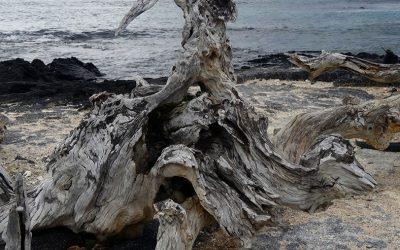 bizarre nature