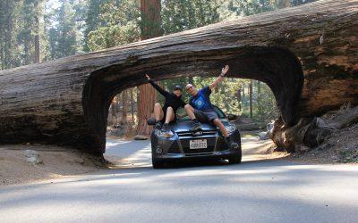 Sequoia Nationalpark I