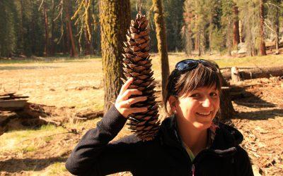 Sequoia Nationalpark II