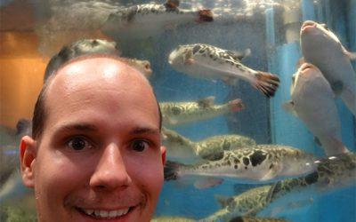 Fugu: Die Wahl