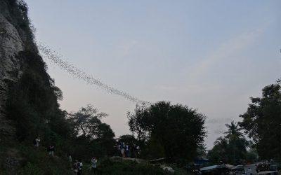 Jeden Abend schwärmen unzählige Fledermäuse aus einer Felshöhle