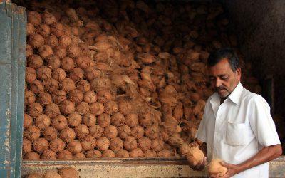 Ein Kokosnussverkäufer